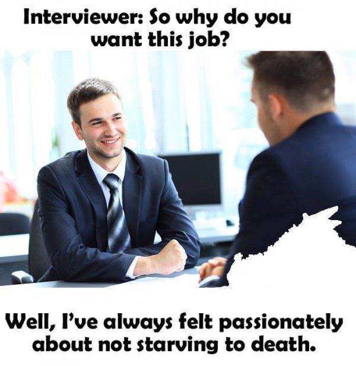 why get a job meme job rejection letter email